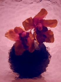 kathedral_min-violet