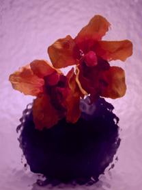 sahara-violet